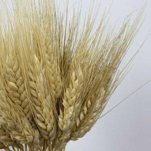 Wheat, Oats & Barley