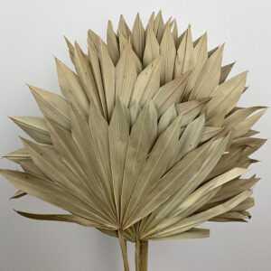 Sun Palms & Sun Spear Palms