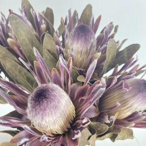 Protea, Banksia, Leucospermum, Leucadendron